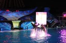 Shamu's Celebration: Light Up the Night